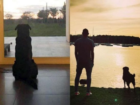 Emiliano Sala's dog is anxiously waiting for his master's return (Photos)