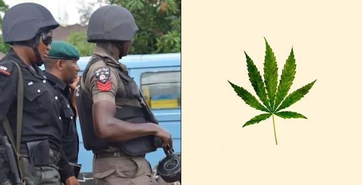 Policemen allegedly 'planted' weed in passenger's bag in Anambra