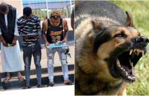 Image result for Yahoo boys unleash dogs on EFCC operatives in Ibadan