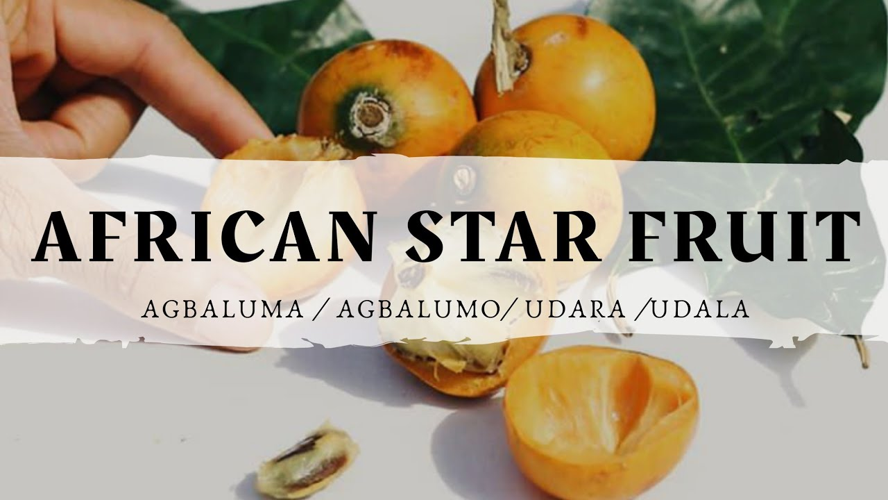 Agbalumo 10 Health Benefits of the African Star Apple